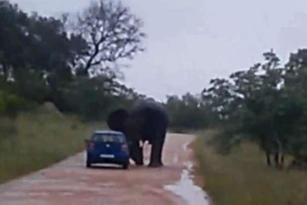 Volkswagen Polo elephant