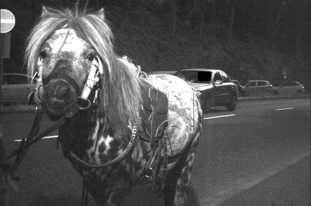 Koń na fotoradarze