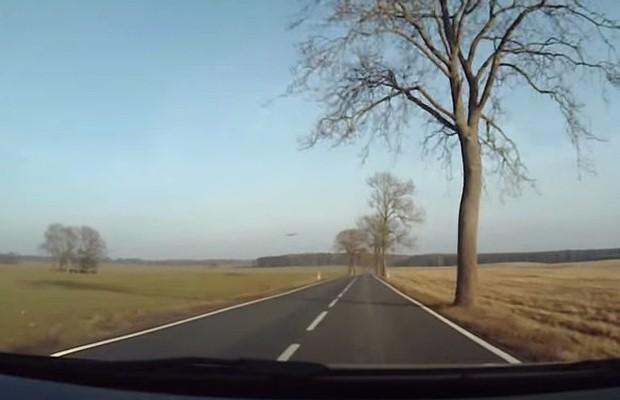 Sarna na drodze