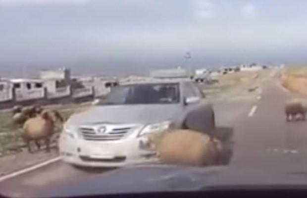 Toyota Camry barany