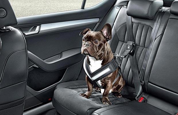 Skoda bezpieczeństwo psa