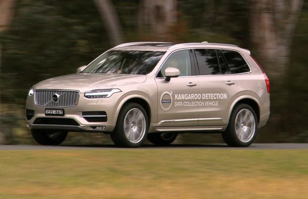 Volvo XC90 kangaroo detection