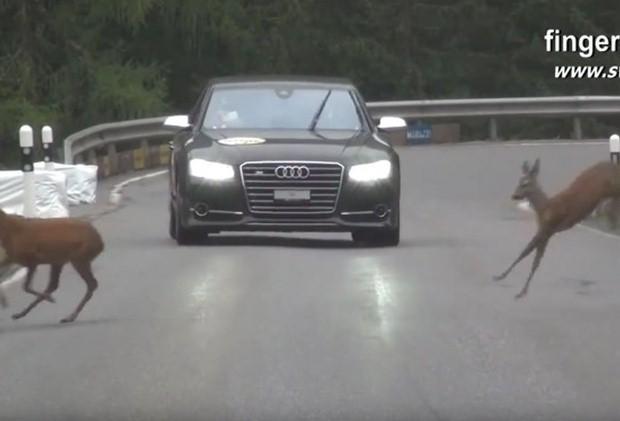 Jelenie i samochód