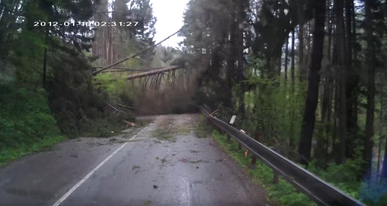 Spadające drzewa