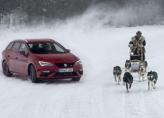 SEAT Leon Cupra 300 kontra psy husky