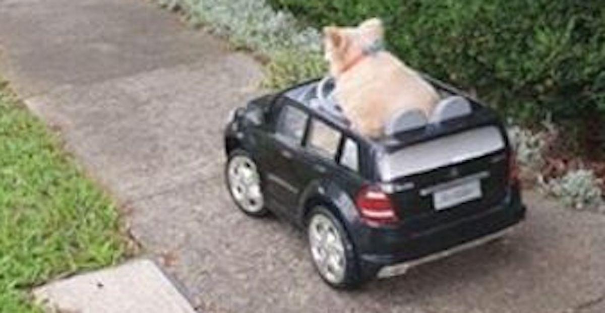 Pies Mercedes Policja